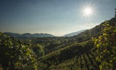 Prosecco-Landschaft